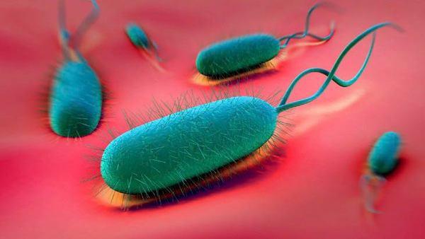 helicobacter pylori infeksiyası