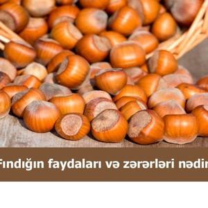 Fındığın faydaları və zərərləri nədir?  hekimtap.az